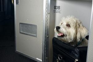 Американцы идут на уловки ради полетов в компании собак и свинок (Газета.Ru)