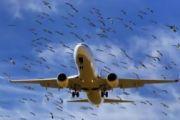 В аэропорту Краснодара самолет Airbus A-319 столкнулся с птицами