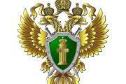 В Новосибирске оштрафован местный житель, запускавший квадрокоптер в зоне маневрирования воздушных судов