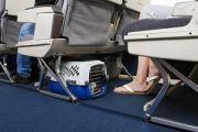Кот Виктор стал первым животным, полетевшим по новым правилам S7