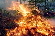 Авиалесоохрана выявила 174 активных пожара на территории России